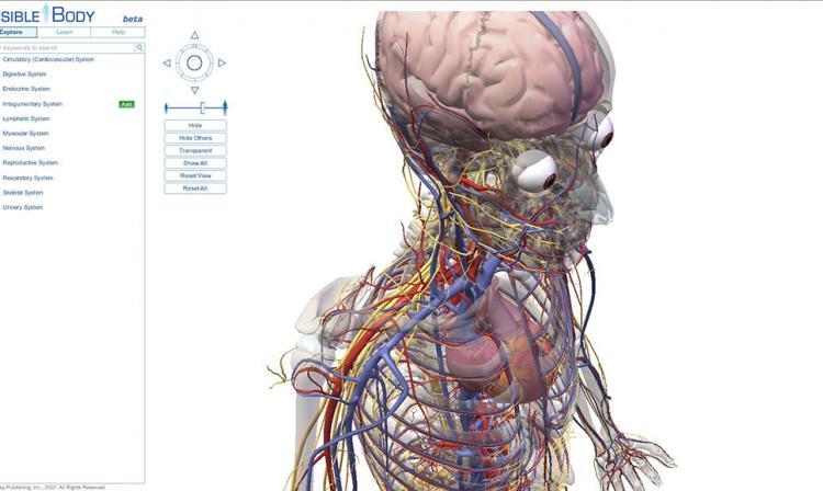 10 partes del cuerpo humano que puedes imprimir en 3D | tecno ...